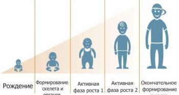 Рост ребенка