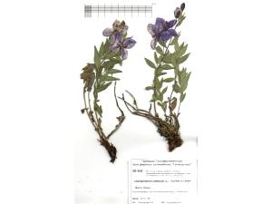 Классический гербарий