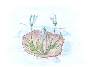 Появление подснежников весной