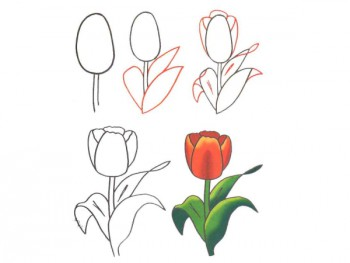 Рисунок весеннего тюльпана своими руками