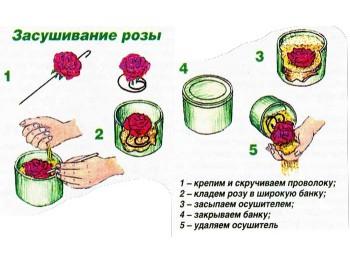 Засушивание бутонов цветов