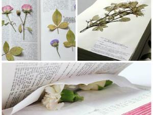 Засушивание гербария в книге